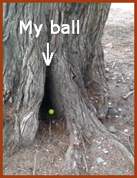 Ball under tree